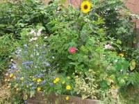 Wiels en Fleurs